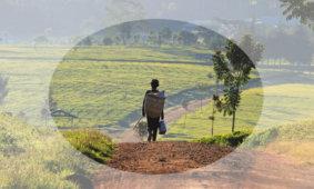 Чайное производство в Кении