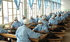 Классификация чая по технологии производства