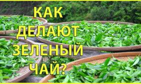 как делают зеленый чай