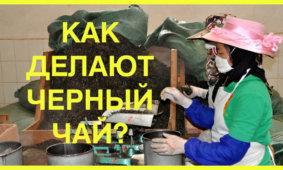 Как делают черный чай? Технология производства черного чая