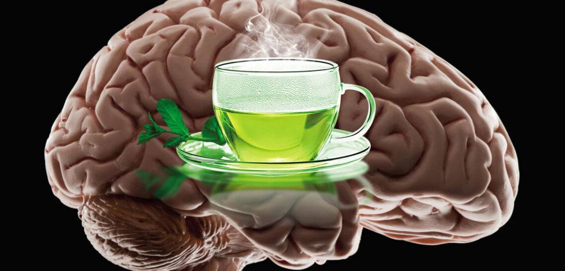 L-теанин и чай. Научные исследования чая